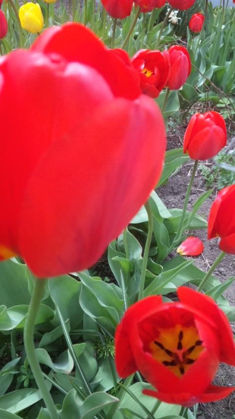 花の季節が待ち遠しいです。。。